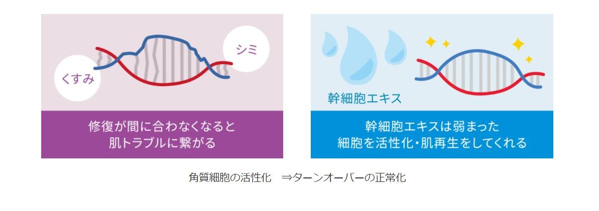 細胞活性化の仕組み